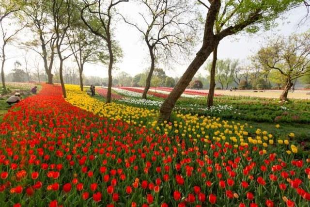 【南京新闻广播】南京中山植物园南园将于明天有序开放