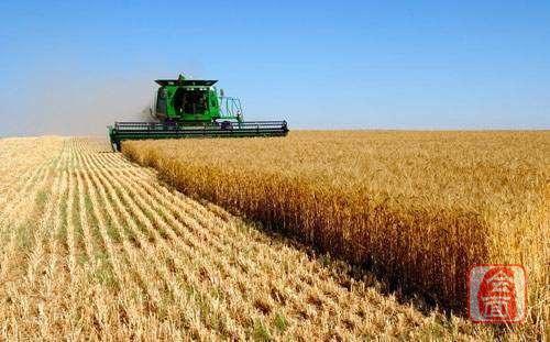 中国之声《新闻和报纸摘要》点赞河南——毫不放松抓好粮食生产 夏粮总产量再创历史新高